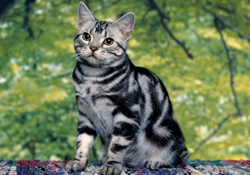 Полосатый кот.
