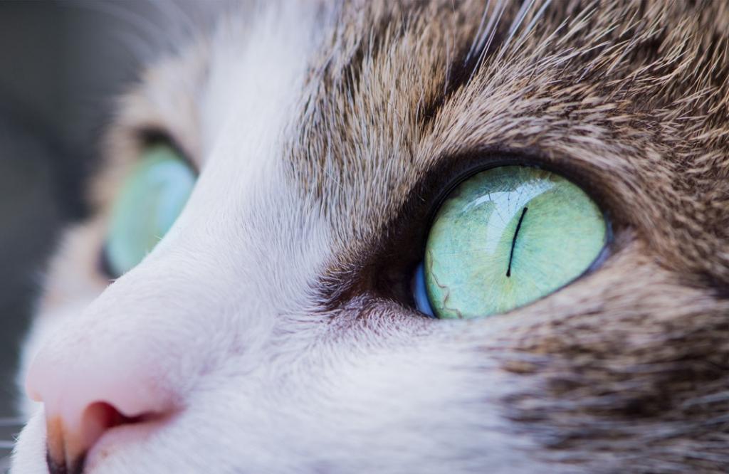 Кошка чувствует присутствие призраков и негативной энергии