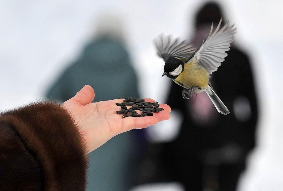 http://fb.ru/media/i/1/0/3/3/4/6/i/103346.jpg