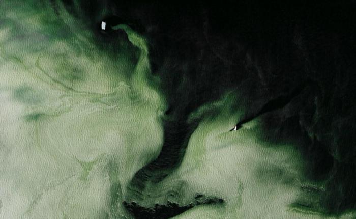 зеленый морской лед