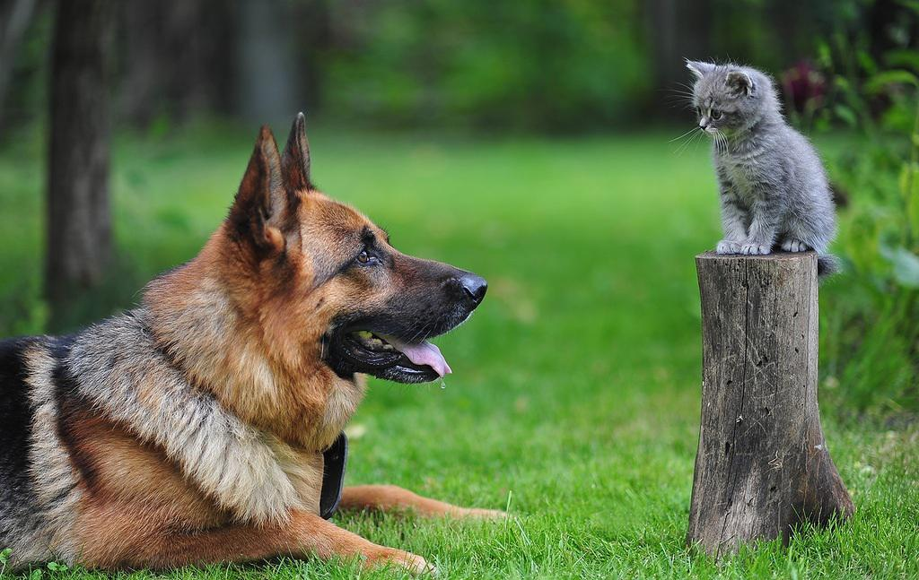 почему у собаки пахнет изо рта рыбой