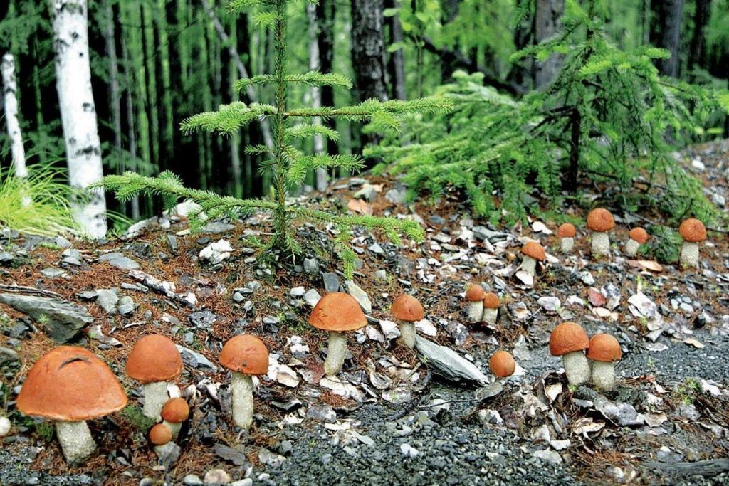 них картинки как растут грибы в лесу первом