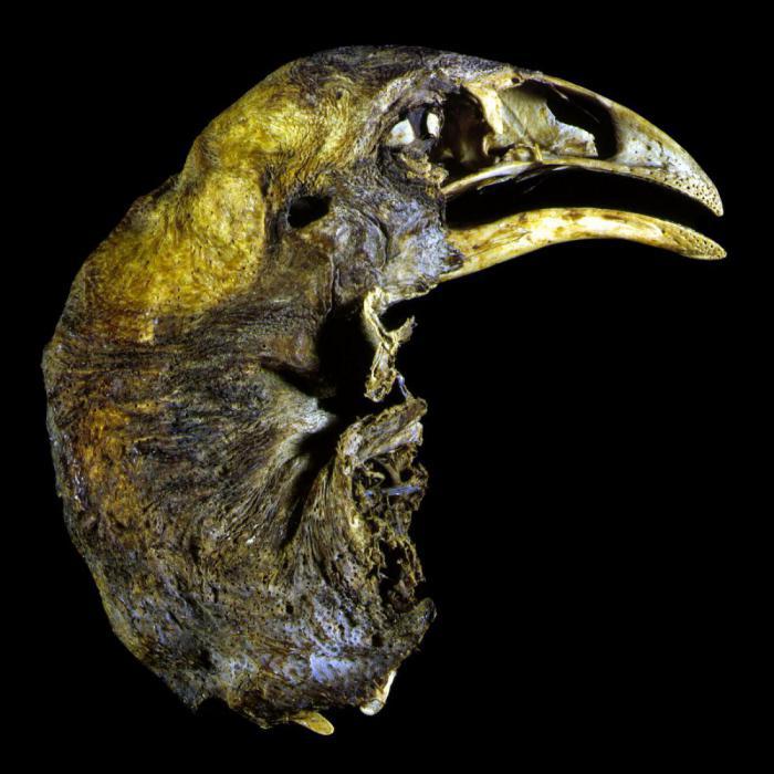 Доисторическая птица