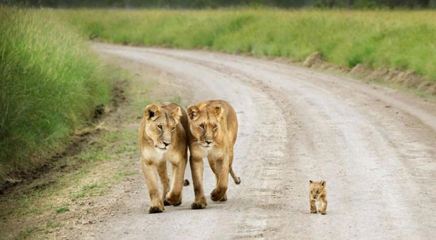 Родительская любовь самая сильная, и это относится не только к людям: фотографии животных, которые оберегают своих детенышей