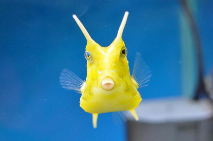 Человеческая морская рыба