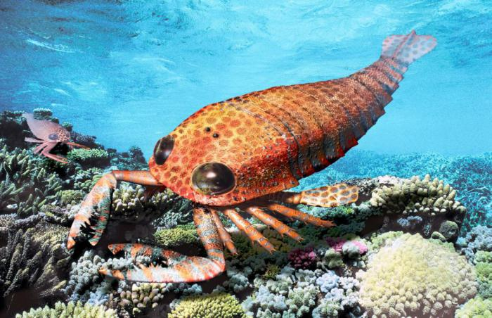Морской скорпион