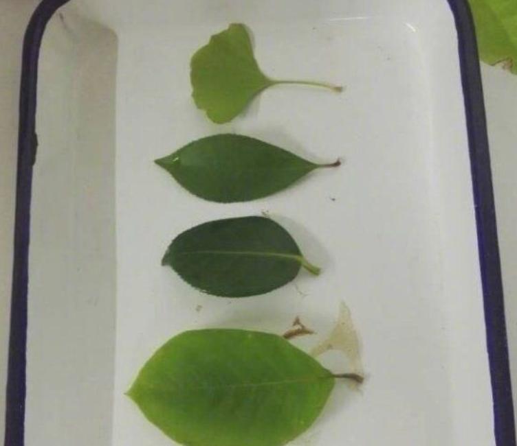 За полгода студенты собрали 6000 листьев, чтобы сделать из них оригинальную вещь