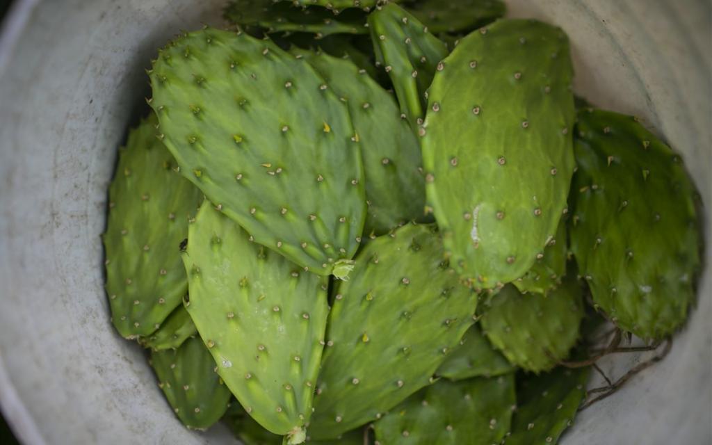Решение проблемы глобального загрязнения: в Мексике создали биоразлагающийся пластик из кактуса