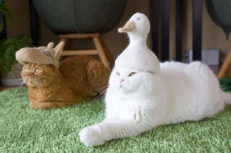 Милость зашкаливает. Художник создает шапки для котов из их собственной шерсти
