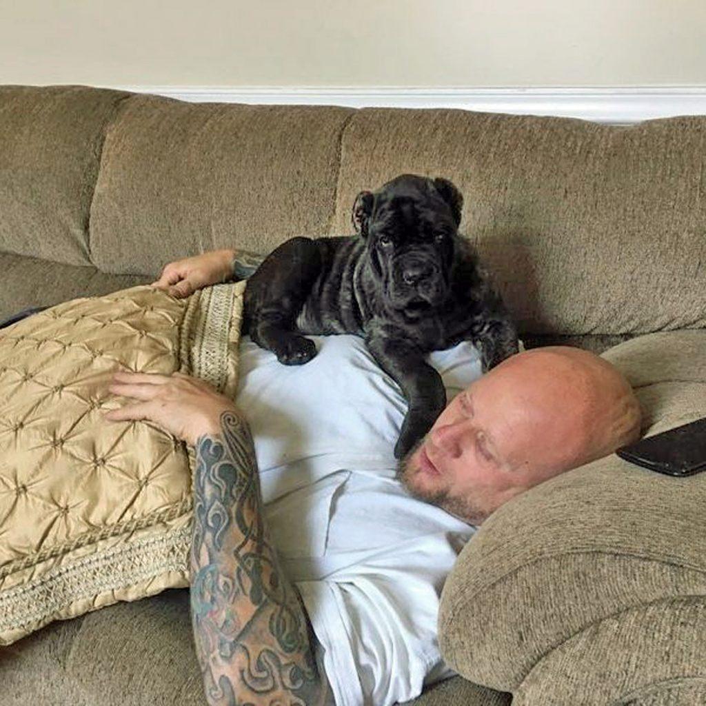 Мужчина купил щенка новой породы и даже не думал, что пес вырастет таким огромным
