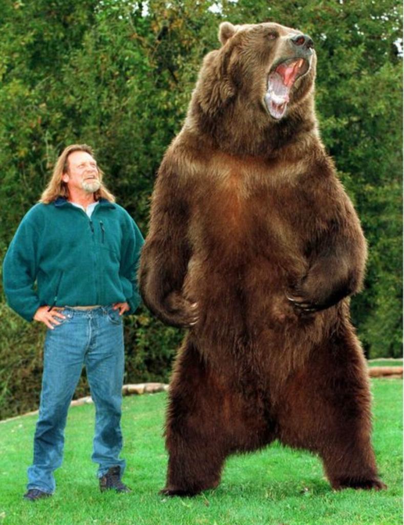 гризли медведь фото с человеком билетов