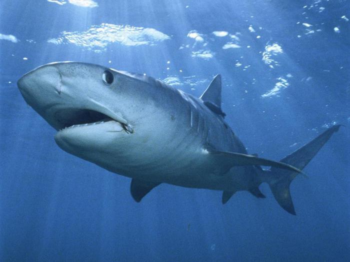 Почему люди так страшатся акул: реальная причина