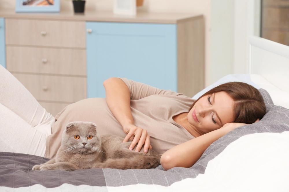 Для защиты малыша и другие причины, почему кошка ложится на живот беременной: народные приметы и научное объяснение