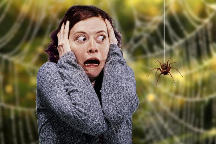 паукофобия