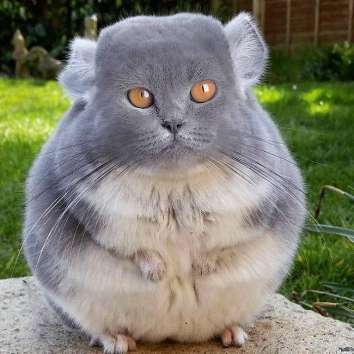 Настоящий гений: фотохудожник представил, что у всех животных появились кошачьи мордочки
