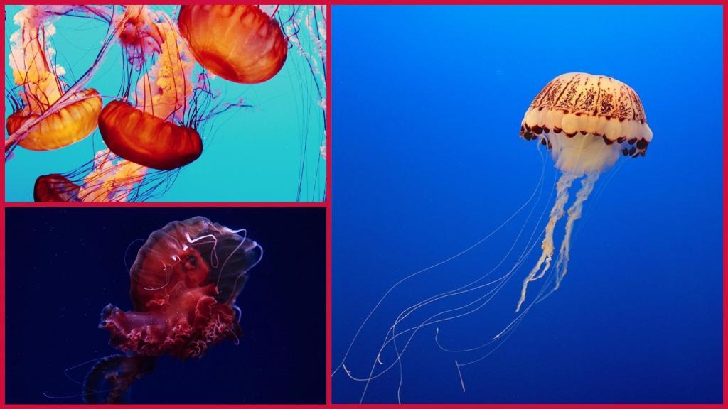 у медуз нет сердца картинки тонкой, мягкой