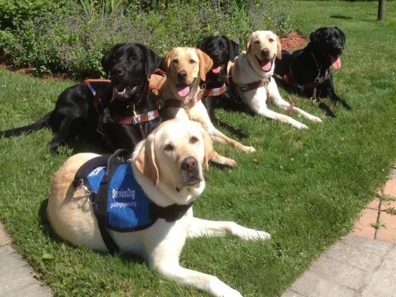 Собаки-поводыри смотрят спектакль. Потрясающие методы обучения друзей человека