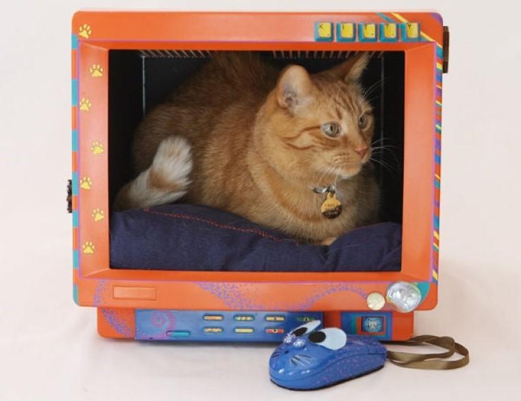 Креативное жилище для вашего питомца: как сделать необычный кошачий домик из старого монитора