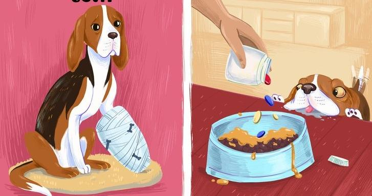 Позволять кошке спать на обогревателе и оставлять еду в миске: какие ошибки владельцев вредят их питомцам