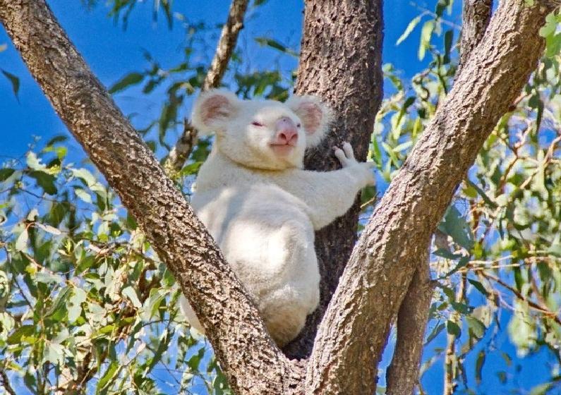Редкие экземпляры животного мира попали в объектив фотокамер: альбиносы, полосатый тюлень, птицы необычной окраски