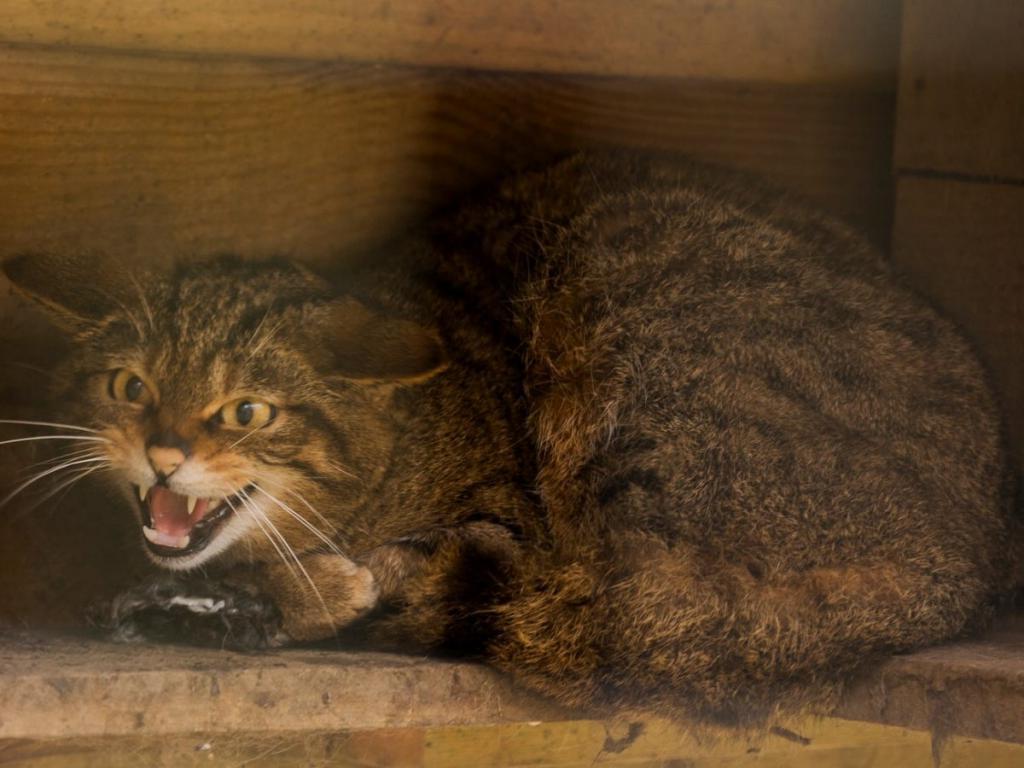 Он опустил хвост к полу: как понять, что ваш кот вас не любит