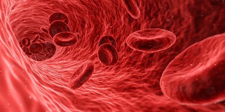 Чистые сосуды: 3 дешевых продукта, эффективнее всего снижающих холестерин