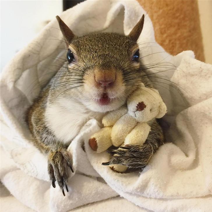 Белка, спасенная во время урагана, никогда не расстается со своим плюшевым мишкой (фото)