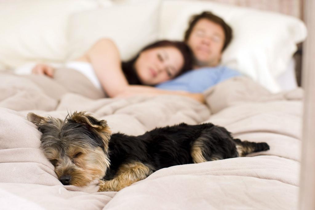этот фото человека любящего поспать клуб москва