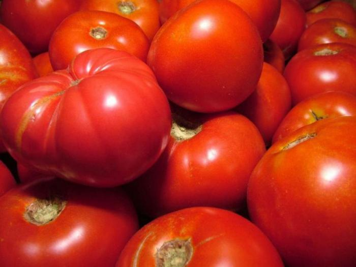 vam azospirillum tomato thesis Testing the effect of the microbial consortium on growth of a microbial consortium consisting of azospirillum and girth of tomato was 5748 and 4761.