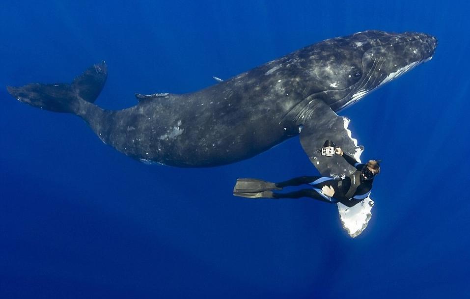 этому кит фото с людьми так гирлянда