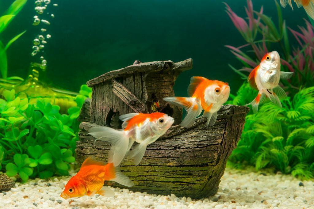 Картинка маленькой рыбки в аквариуме