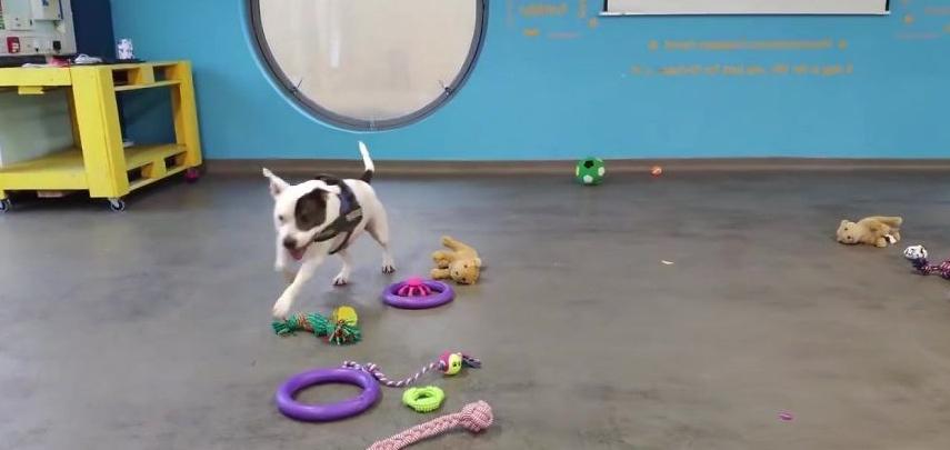 В приюте для животных собаки для себя выбирают рождественские подарки