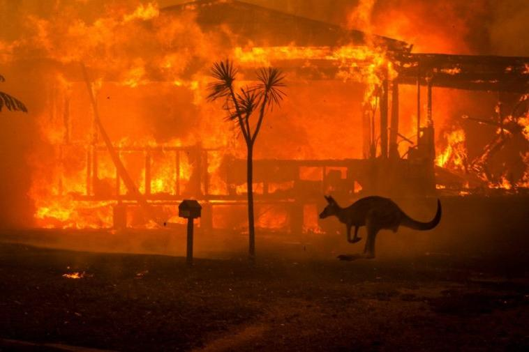 Снимки со спутника NASA Terra: фото до и после пожаров австралийского острова Кенгуру