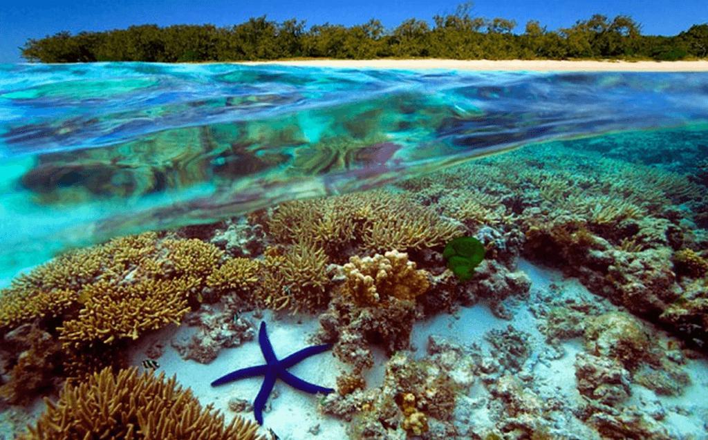 """Энди Ридли, основатель акции """"Час Земли"""", проведет перепись Большого Барьерного рифа"""