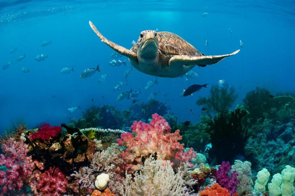 Каждый год в океан попадает 8 миллионов кубометров пластика. Интересные факты, которые мы узнали об океанах за последние 10 лет