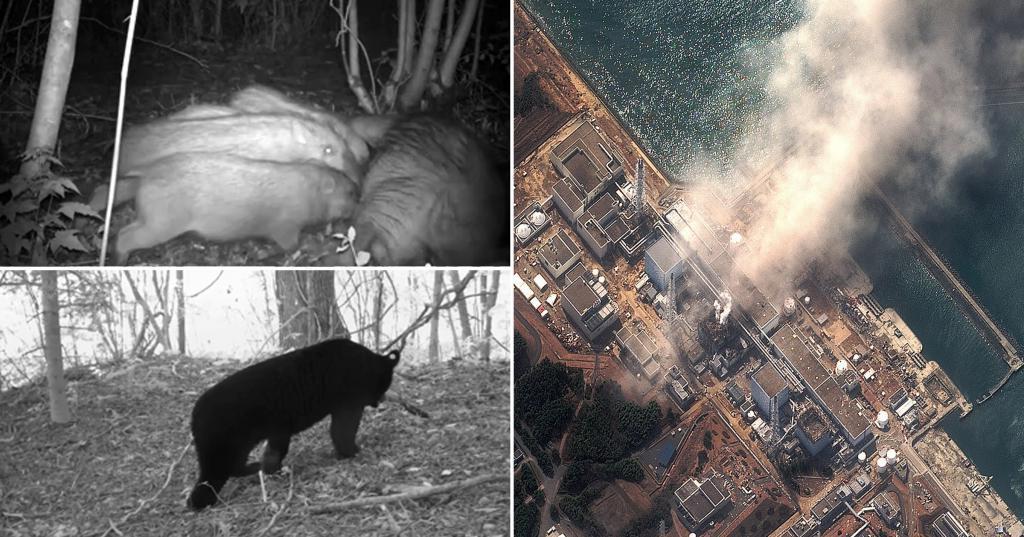 это странное фото было сделано в чернобыле животным даже повезло
