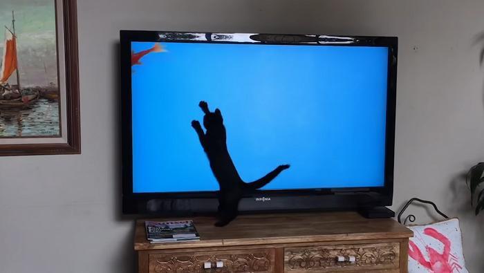 Кошки – это вам не собаки: веселые питомцы, которые заставили владельцев смеяться до слез (видео)