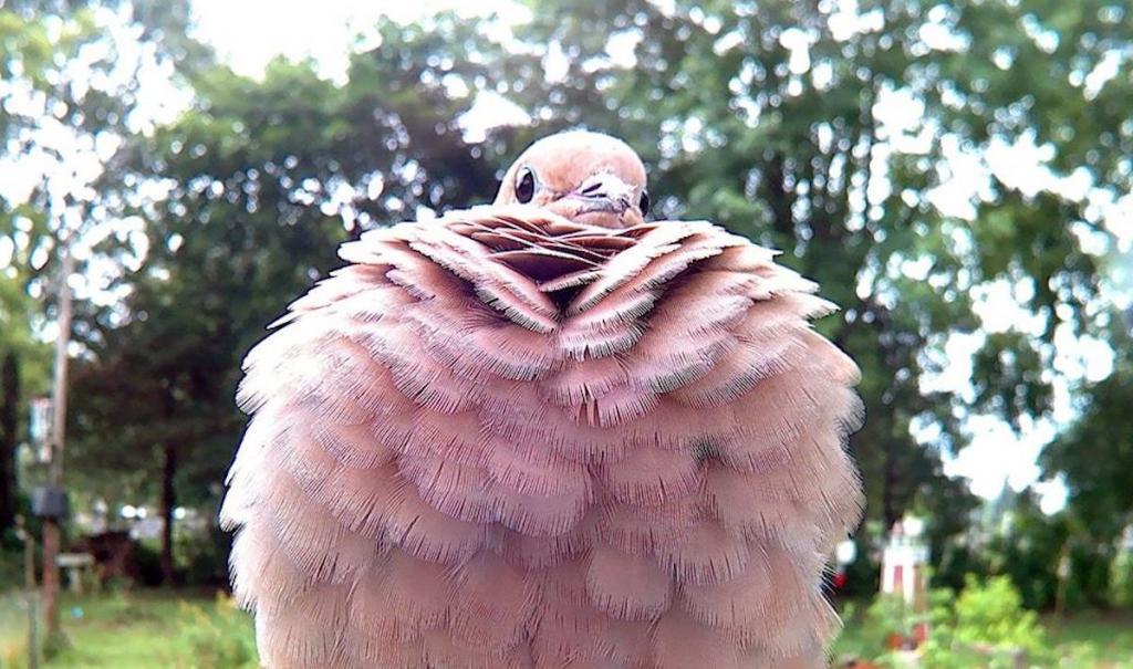 Кормушка с камерой - гениальная идея: великолепные снимки птиц