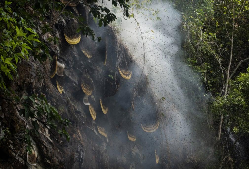 В гостях у пчел: охота за медом в китайской провинции Юньнань глазами фотографа