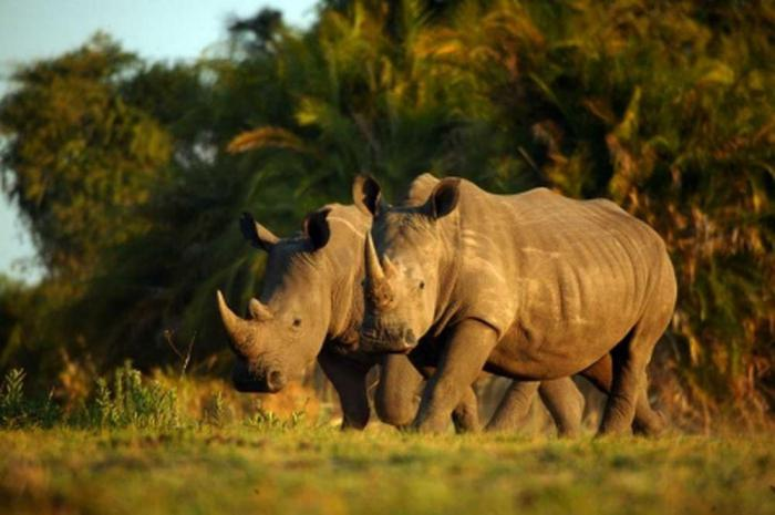 Национальный парк Конго