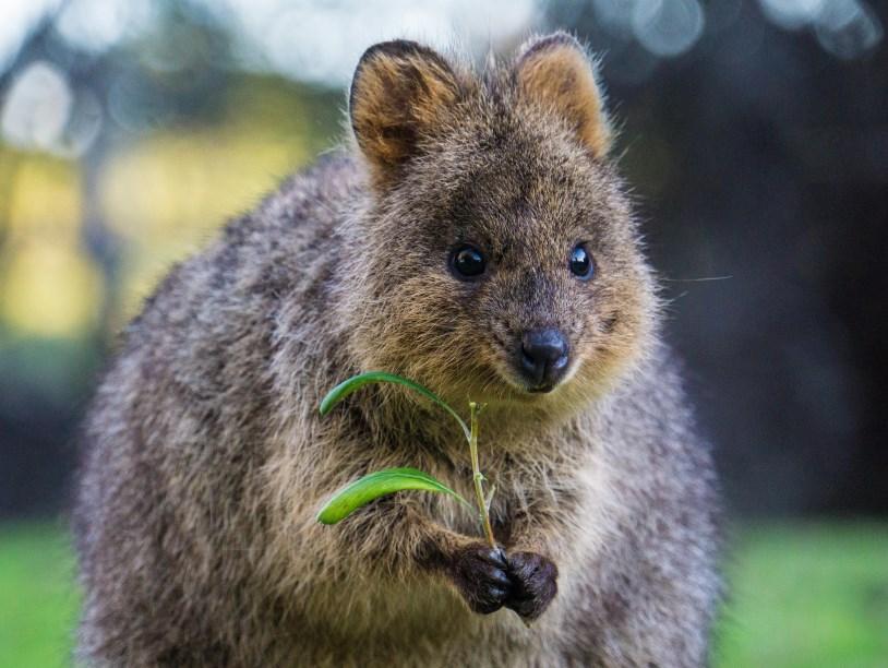 вам австралийские животные фото с названиями поселка протяженная полоса