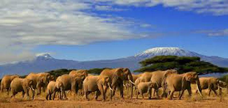 Лучшее экзотическое направление-2020: непознанная Кения - путешествие на 7 дней