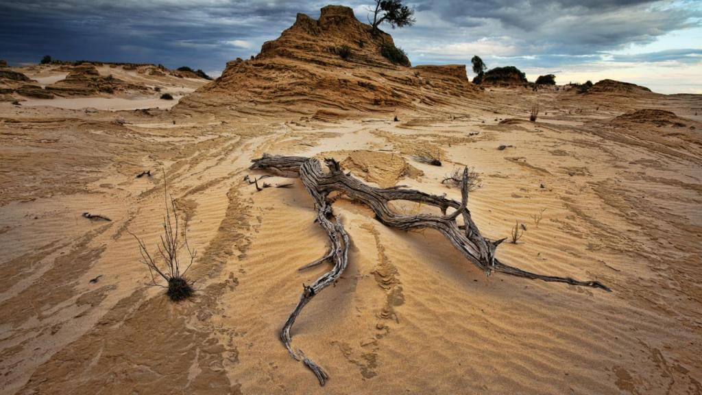 Питер Эндрюс борется с углеродом с помощью сорняков в Австралии, где земля страдает от засухи