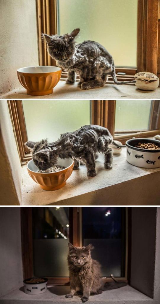Бездомные кошки, которые обрели дом: фото до и после