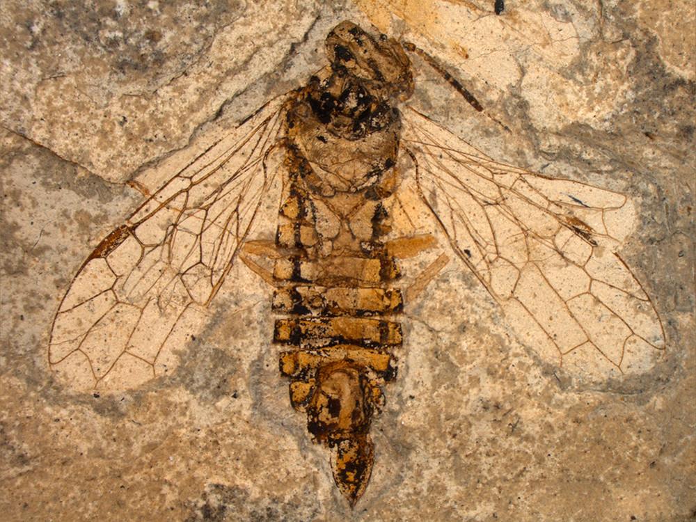 последующее десятилетия древние пчелы фото настолько великолепен, что