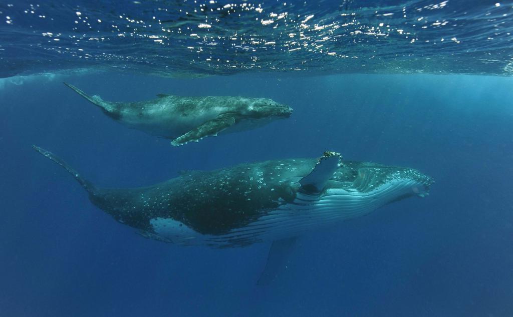 Почему киты мигрируют? Ученые выяснили, что они возвращаются в тропики, чтобы сбросить кожу