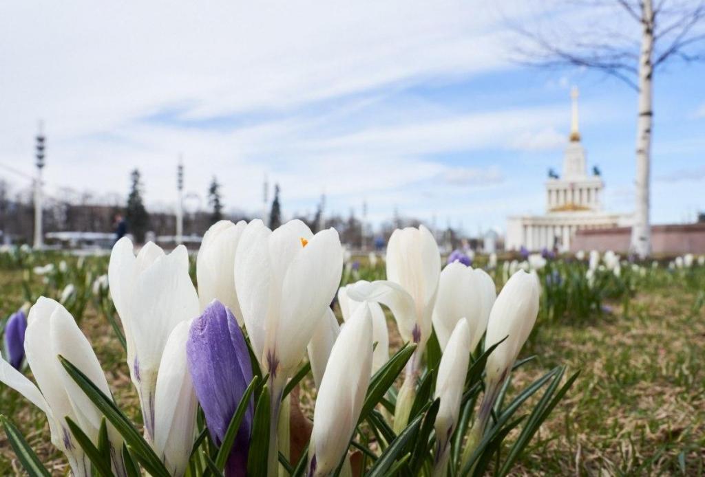 """Как сообщил центр погоды """"Фобос"""", в Москве наступила метеорологическая весна"""