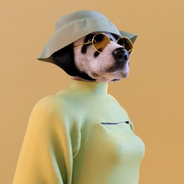 Модные наряды на собак, которые ведут себя как люди: необычная фантазия испанских дизайнеров