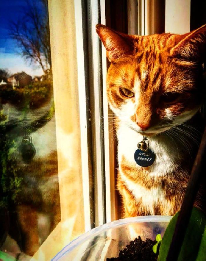 Мама Боба заболела коронавирусом и находится в карантине. Он попросил присылать ему фотографии кошек, чтобы поднять ей настроение, и получил 50 000 ответов в Сети