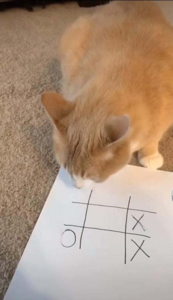Увидев ролик в интернете, девушка решила научить свою кошку играть в крестики-нолики: понадобилась пара секунд (видео)